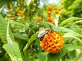 Get buzzy ahead of Great British Bee Count 2017